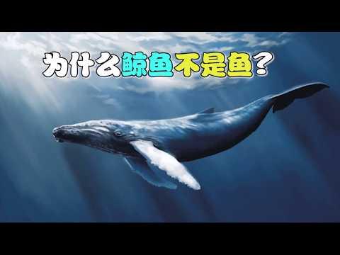 【十万个为什么】为什么鲸鱼不是鱼?|十萬個為什麼|Uncle Why TV - YouTube