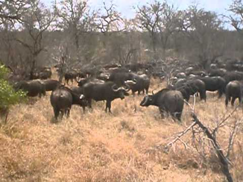 YouTube South Africa Safari Video.wmv