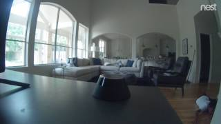 The last thing my Nest cam saw...