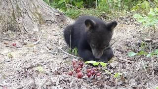 Otto, Rollo, Dani and Summitt Bear-July 22, 2017