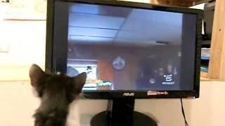 Kiki e il suo programma preferito sui gatti