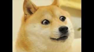 Ivona - Doge Król Internetów
