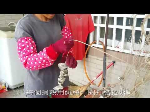 台西鄉民鑽蚵殼綁蚵串情形 - YouTube