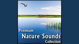 Nature Sounds for Yoga: Gentle Sound Effects Download