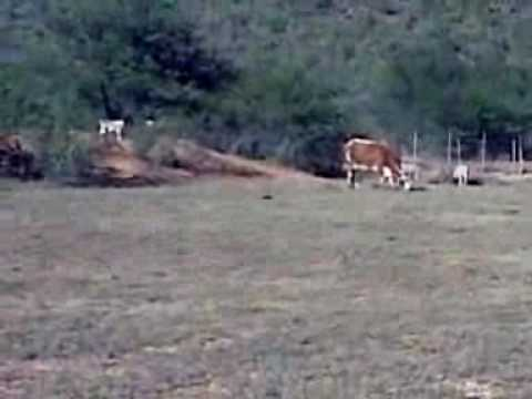 Mooiberg, Cattle and Sheep Farming, Klein Karoo