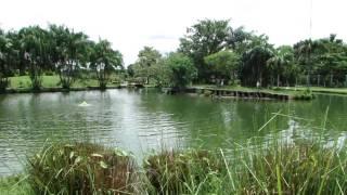 Belém do Pará - Mangal das Garças 03