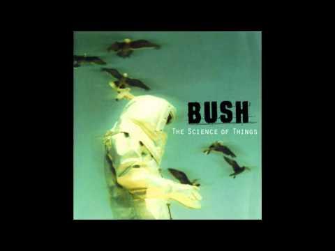 bush-english-fire-0910bush