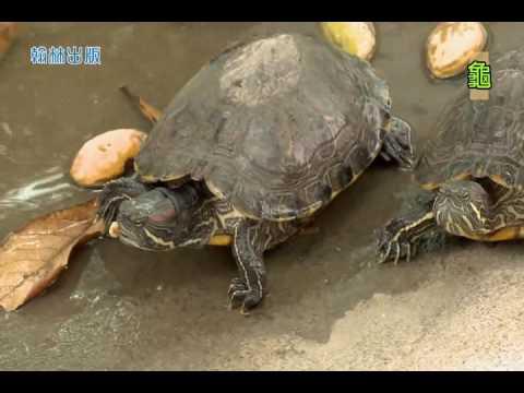 國小_自然_水生動物的特殊構造【翰林出版_四上_第二單元 水生生物的世界】 - YouTube