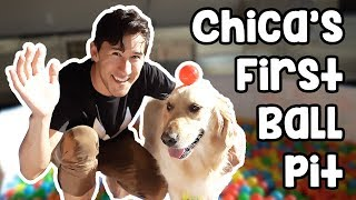 Chica's First Ball Pit width=