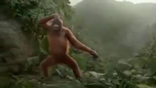 macaco louco  duvido você durmir sem cuberta