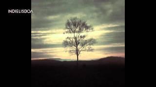 The Last Analog Tree - Jorge Pelicano