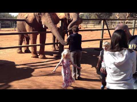 The Elephant Sanctuary – Feeding the Elephants
