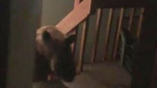 Man Chased by Bear Inside Home