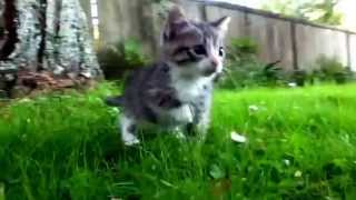 My kittens first time walking on grass about a year ago!!!