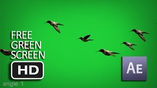 Free Green Screen - Flying Birds Animated (Moving) HD