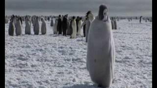 Pinguins-imperadores na Antártica