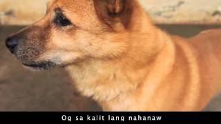 Ulipon sa Gugmang Gi-atay music video (rock version)