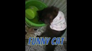 Kucing Imut Lucu sekali part 6 Funny Cat part 6