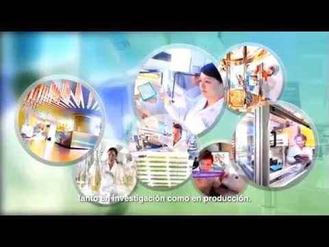 Bayer Global