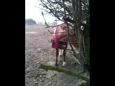 Horse Vote