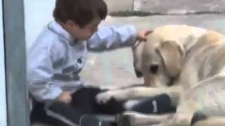 Lindo vídeo de um cachorro e uma criança especial - Amor!
