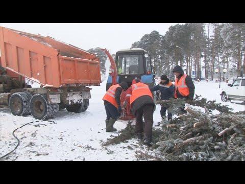 В Николо-Березовке решили проблему ликвидации сухостоя