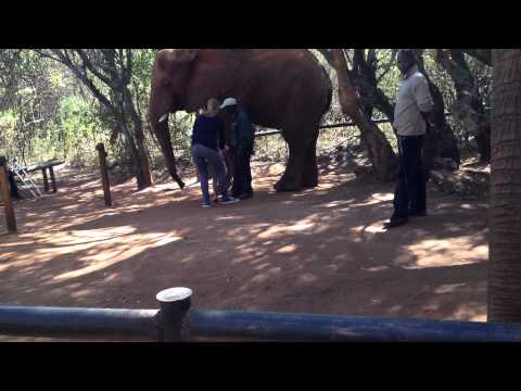 The Elephant Sanctuary – John & Alexandra touching an Elephant