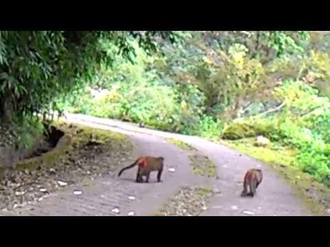 花蓮縣中正國小403佐倉步道健行~給猴子看5 - YouTube