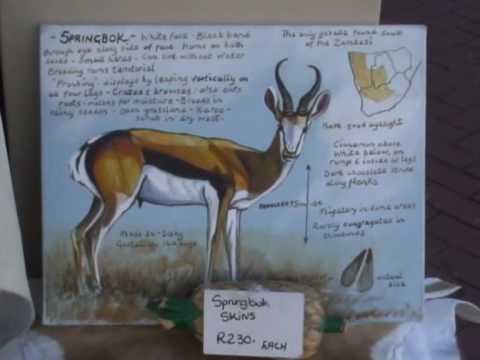 Skóra Springbok;a