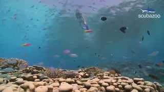 Scuba Diving Maldives - Beautiful HD Underwater Footage