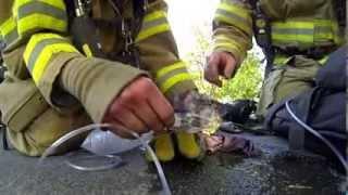 Tohle video je hitem internetu  Hasič oživil mrtvé koťátko