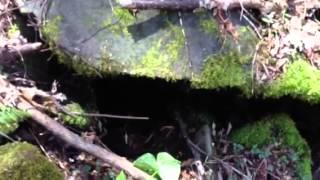 Sound of mountain stream