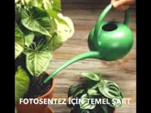 fotosentez.flv