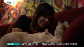 Egypt's new custom tax claims a new victim: felines