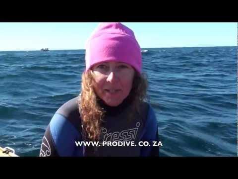 Sardine Run South Africa Nelson Mandela Bay Update  :5 June 2012