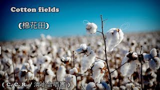 Cotton fields     ( C. C. R. ) (高畫質 高音質) (中文翻譯)