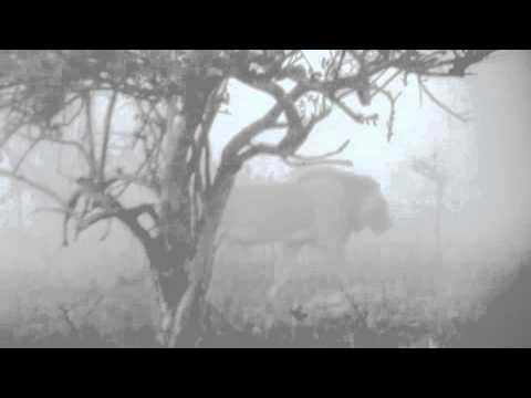 Lion in the mist – Tembe Elephant Park