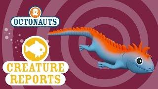 Octonauts: Creature Report - Marine Iguanas