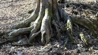 Hidden Wood - Sweet Lullaby