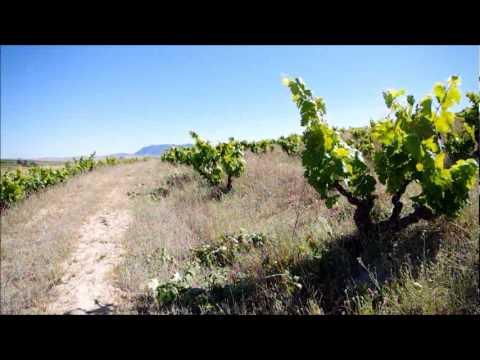 Lammershoek's Vineyards