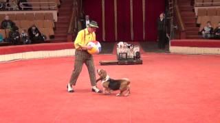 Yakuboskie.ru DogShow Clown with dogs Moscow Circus Клоун с собачками