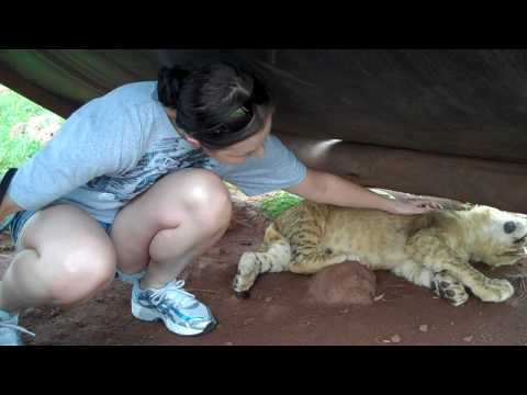 Playing with Lion Cubs Part 1