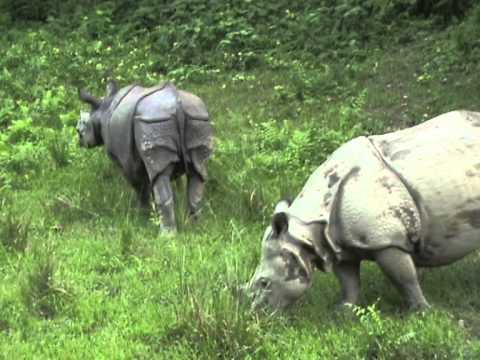 Rhino watching in Chitwan Park, Nepal