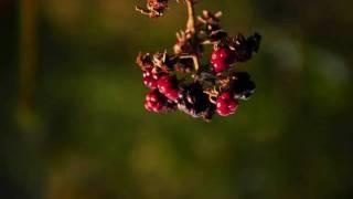 Fotograph - Rubus sectio Rubus - wilde Brombeere