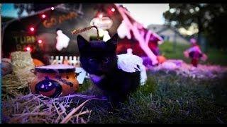 Haunted House Kitten Dubstep