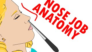 Nose Job And Nose Anatomy (Rhinoplasty) - Sense Of Smell Physiology
