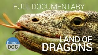 Full Documentary. Komodo Dragon | Land of Dragons  - Planet Doc Full Documentaries
