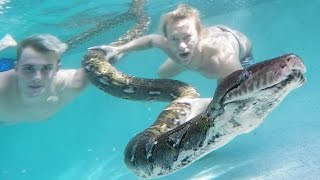 GIANT SNAKES in my Pool w/ Jake Paul and Brian Barczyk!
