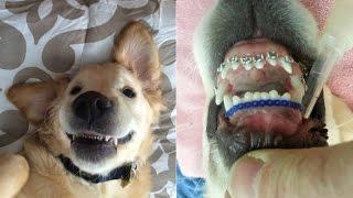 Veterinario coloca brackets a un perro y este es el resultado