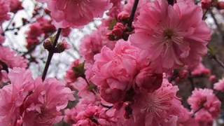 Tavaszi szél vizet áraszt (T- Mobile)